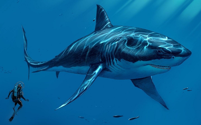 Gözümüz köpek balıklarının gözlerine çok benzemekte
